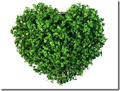 Saint_Valentines_Day_Heart_of_the_greens_013163_